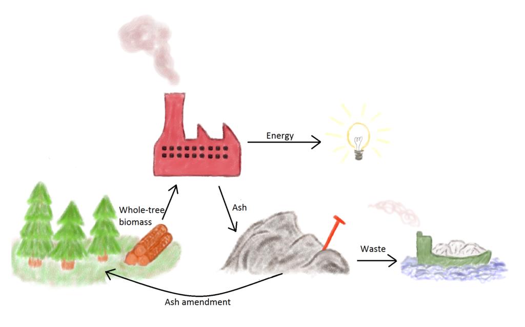 Genanvendelse af bioaske som gødning i skovplantager